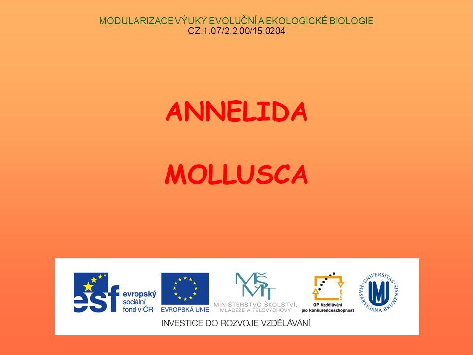 MODULARIZACE VÝUKY EVOLUČNÍ A EKOLOGICKÉ BIOLOGIE CZ.1.07/2.2.00/15.0204 ANNELIDA MOLLUSCA