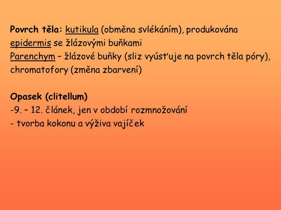 Podtřída Euhirudinea (vlastní pijavky) Řád Arhynchobdellida Hirudo medicinalis (pijavka lékařská) - citlivá na znečištění vody - saje krev na obratlovcích (hlavně žáby) -tmavě olivově zbarvená s podélnými žlutými až oranžovými pruhy -délka těla kolem 12 cm -ústní dutina – 3 silné čelisti ( → trojcípá ranka po nasátí = Y ) -příústní přísavka menší než zadní