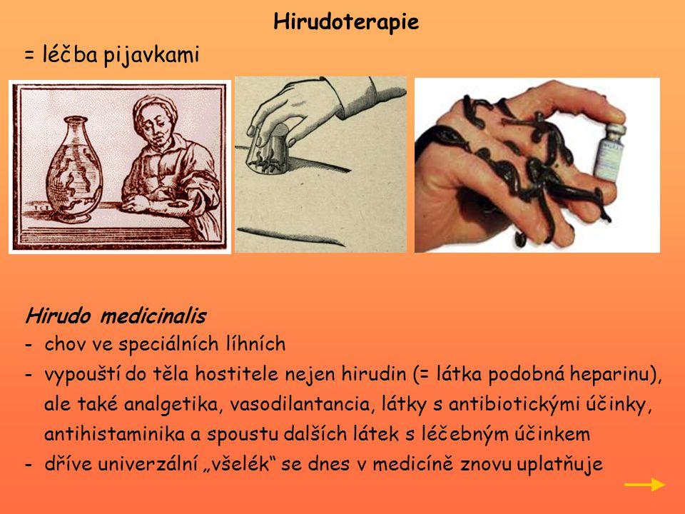 """Hirudoterapie = léčba pijavkami Hirudo medicinalis -chov ve speciálních líhních -vypouští do těla hostitele nejen hirudin (= látka podobná heparinu), ale také analgetika, vasodilantancia, látky s antibiotickými účinky, antihistaminika a spoustu dalších látek s léčebným účinkem -dříve univerzální """"všelék se dnes v medicíně znovu uplatňuje"""