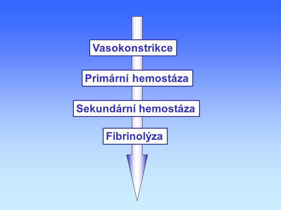 Vasokonstrikce Primární hemostáza Sekundární hemostáza Fibrinolýza