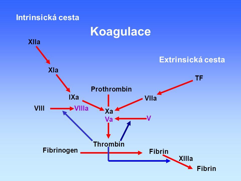 Fibrinogen Fibrin Thrombin Prothrombin Xa Va VIIa TF Extrinsická cesta IXa VIIIa XIa XIIa Intrinsická cesta XIIIa Fibrin V VIII Koagulace