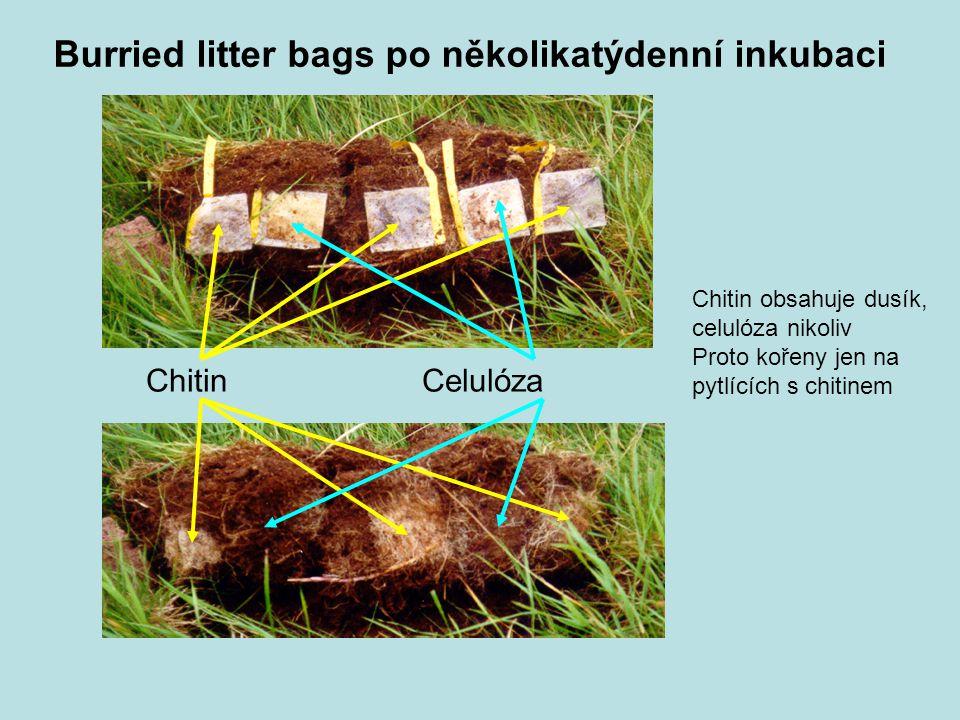 Chitin Celulóza Burried litter bags po několikatýdenní inkubaci Chitin obsahuje dusík, celulóza nikoliv Proto kořeny jen na pytlících s chitinem