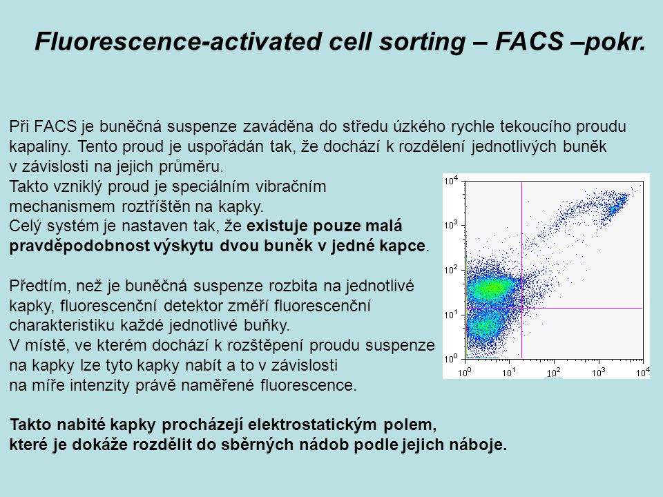 Při FACS je buněčná suspenze zaváděna do středu úzkého rychle tekoucího proudu kapaliny. Tento proud je uspořádán tak, že dochází k rozdělení jednotli