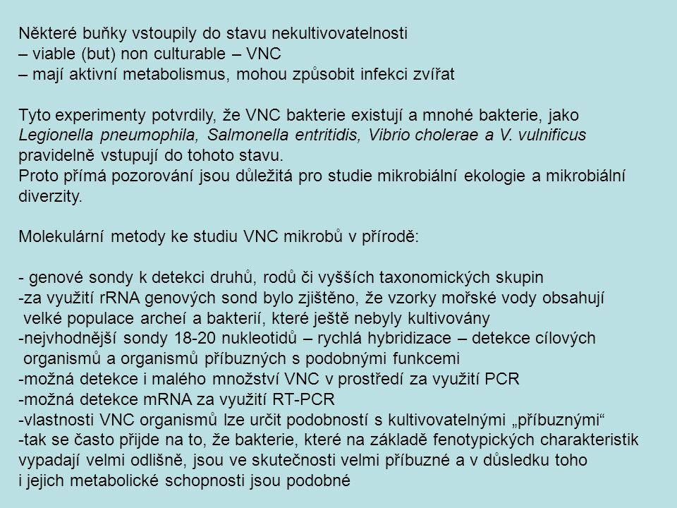 Některé buňky vstoupily do stavu nekultivovatelnosti – viable (but) non culturable – VNC – mají aktivní metabolismus, mohou způsobit infekci zvířat Ty