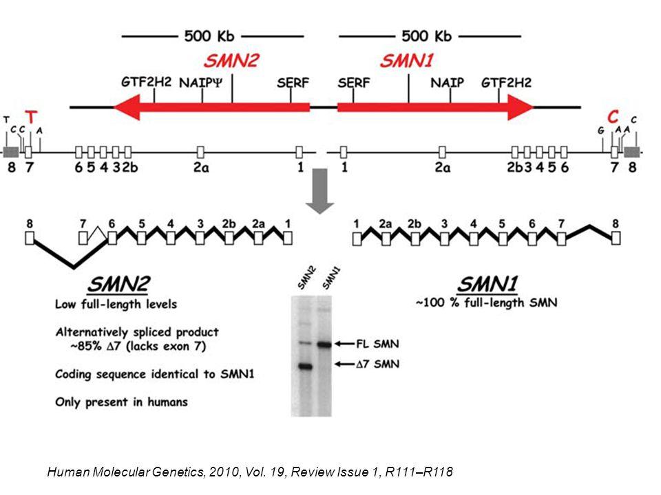 Human Molecular Genetics, 2010, Vol. 19, Review Issue 1, R111–R118