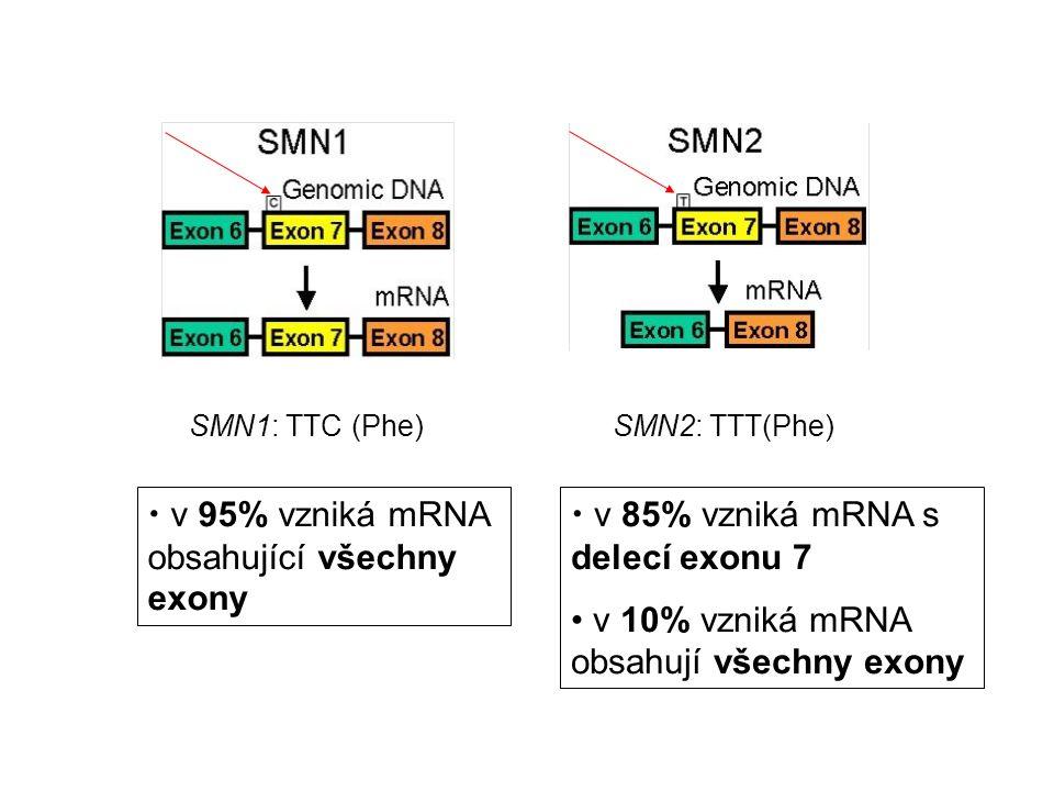 SMN1: TTC (Phe)SMN2: TTT(Phe) v 95% vzniká mRNA obsahující všechny exony v 85% vzniká mRNA s delecí exonu 7 v 10% vzniká mRNA obsahují všechny exony