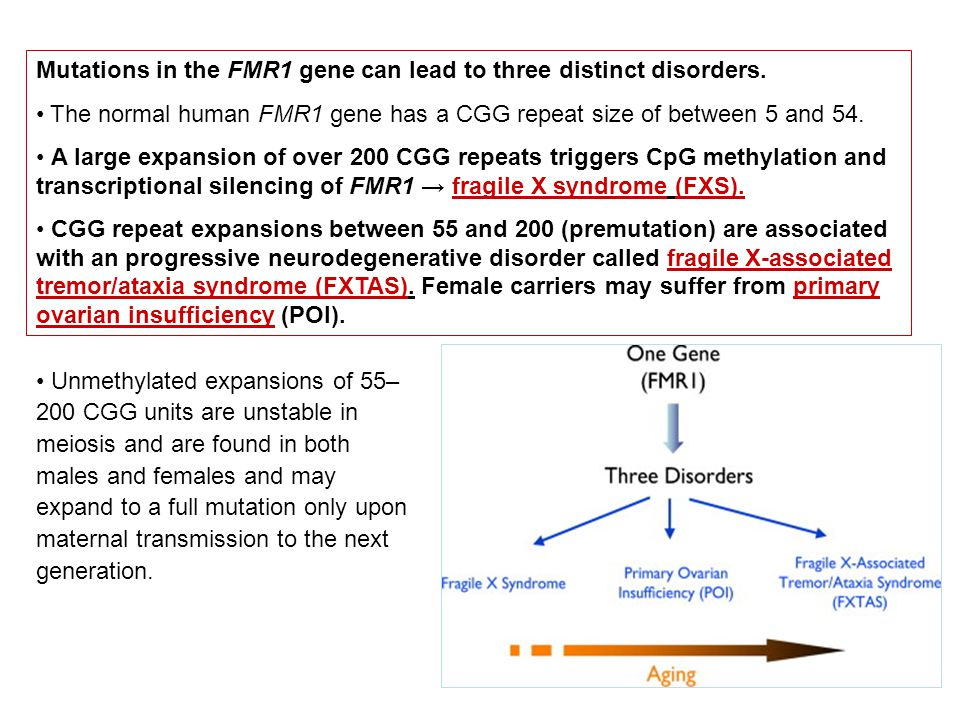 Mutations in the FMR1 gene can lead to three distinct disorders. The normal human FMR1 gene has a CGG repeat size of between 5 and 54. A large expansi