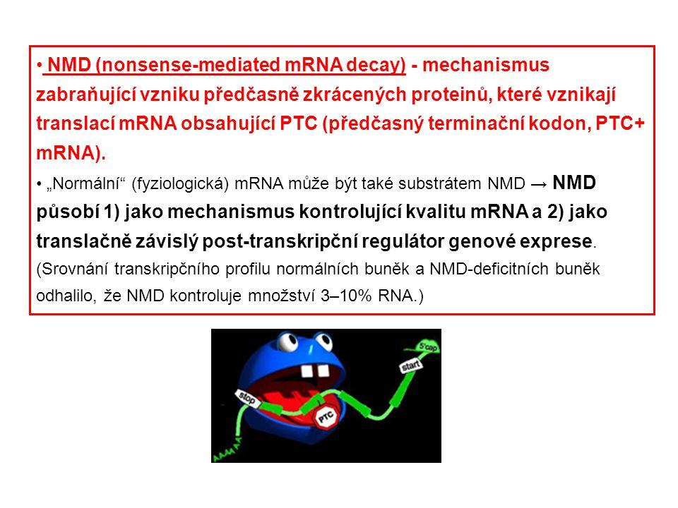 NMD (nonsense-mediated mRNA decay) - mechanismus zabraňující vzniku předčasně zkrácených proteinů, které vznikají translací mRNA obsahující PTC (předč