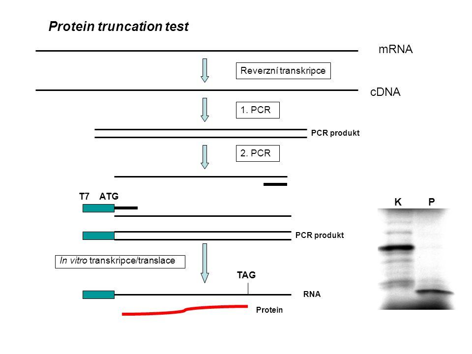 mRNA Protein truncation test cDNA Reverzní transkripce 1. PCR 2. PCR T7 ATG In vitro transkripce/translace TAG PCR produkt RNA Protein K P