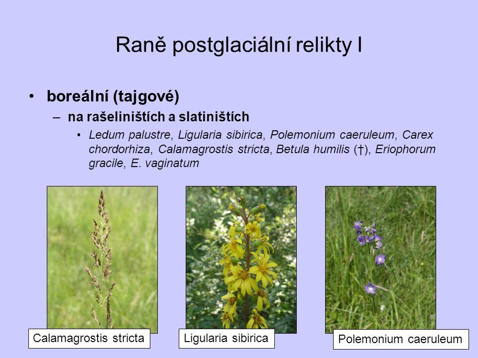 Raně postglaciální relikty I boreální (tajgové) –na rašeliništích a slatiništích Ledum palustre, Ligularia sibirica, Polemonium caeruleum, Carex chord