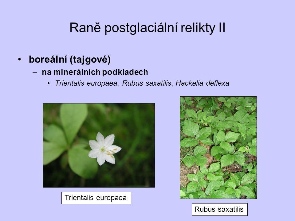 Raně postglaciální relikty II boreální (tajgové) –na minerálních podkladech Trientalis europaea, Rubus saxatilis, Hackelia deflexa Trientalis europaea