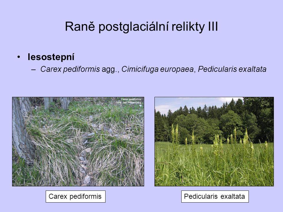 Raně postglaciální relikty III lesostepní –Carex pediformis agg., Cimicifuga europaea, Pedicularis exaltata Carex pediformisPedicularis exaltata