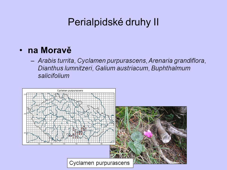 Perialpidské druhy II na Moravě –Arabis turrita, Cyclamen purpurascens, Arenaria grandiflora, Dianthus lumnitzeri, Galium austriacum, Buphthalmum sali