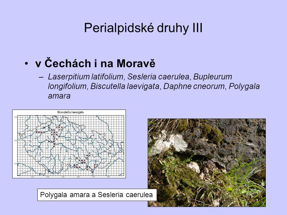 Perialpidské druhy III v Čechách i na Moravě –Laserpitium latifolium, Sesleria caerulea, Bupleurum longifolium, Biscutella laevigata, Daphne cneorum,