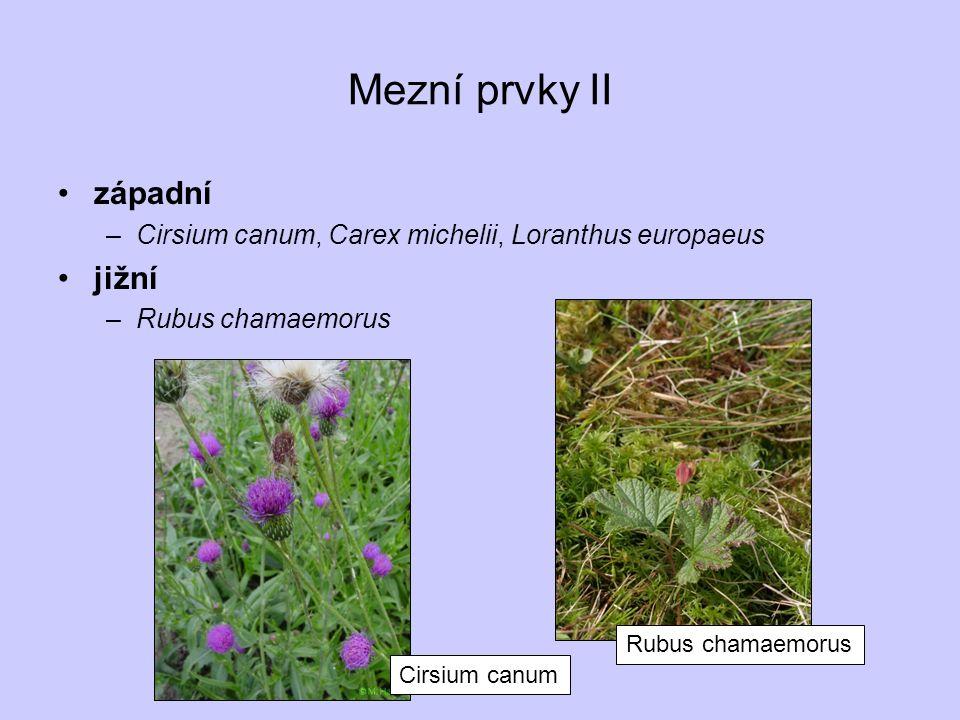 Mezní prvky II západní –Cirsium canum, Carex michelii, Loranthus europaeus jižní –Rubus chamaemorus Rubus chamaemorus Cirsium canum