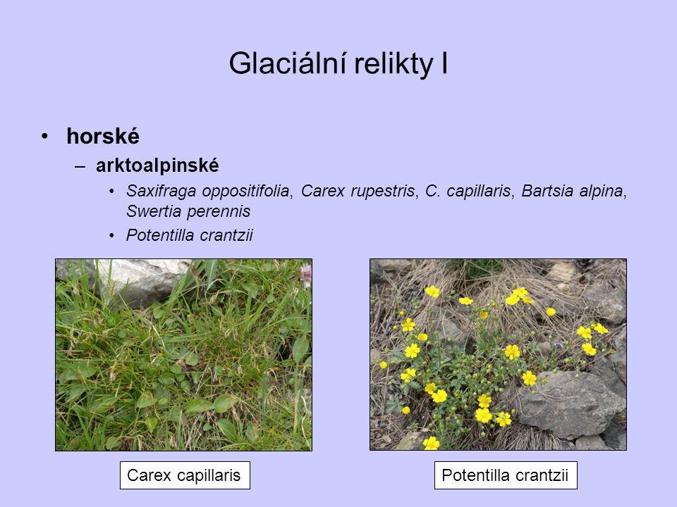 Perialpidské druhy II na Moravě –Arabis turrita, Cyclamen purpurascens, Arenaria grandiflora, Dianthus lumnitzeri, Galium austriacum, Buphthalmum salicifolium Cyclamen purpurascens