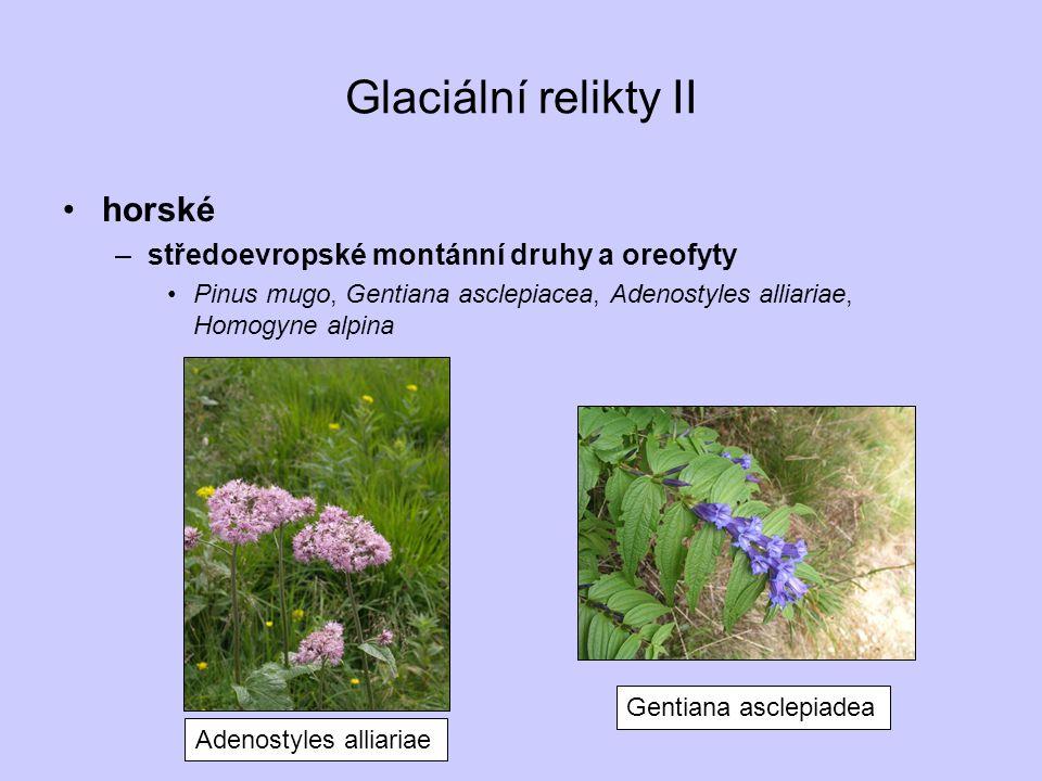 Glaciální relikty II horské –středoevropské montánní druhy a oreofyty Pinus mugo, Gentiana asclepiacea, Adenostyles alliariae, Homogyne alpina Adenost