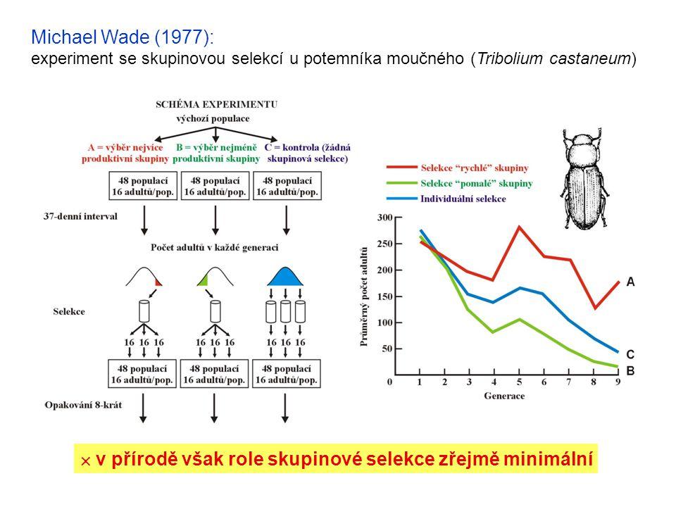 Michael Wade (1977): experiment se skupinovou selekcí u potemníka moučného (Tribolium castaneum)  v přírodě však role skupinové selekce zřejmě minimá