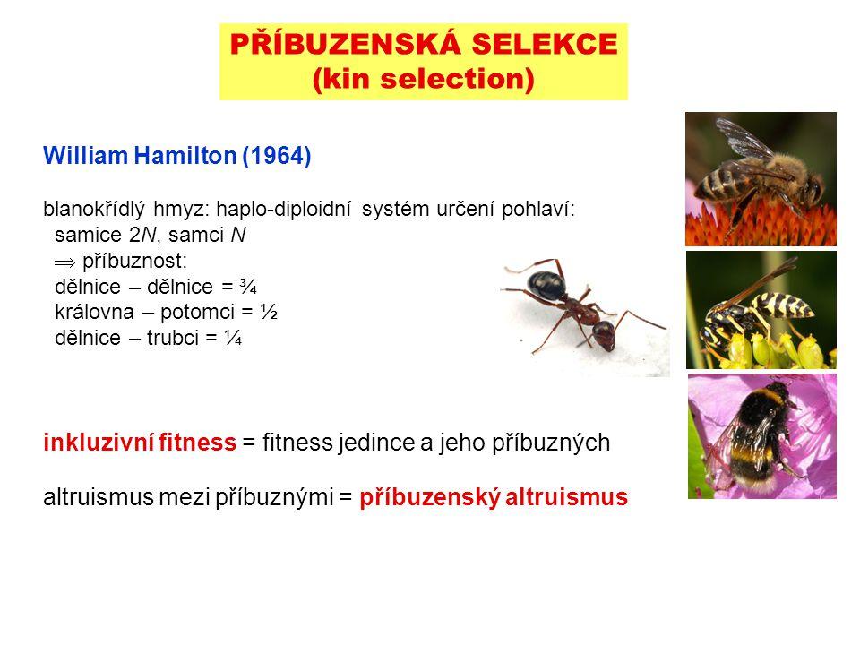William Hamilton (1964) blanokřídlý hmyz: haplo-diploidní systém určení pohlaví: samice 2N, samci N  příbuznost: dělnice – dělnice = ¾ královna – pot