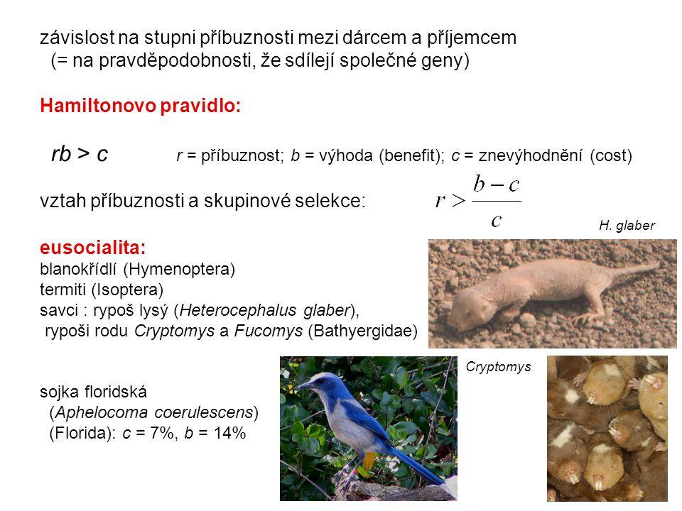 eusocialita: blanokřídlí (Hymenoptera) termiti (Isoptera) savci : rypoš lysý (Heterocephalus glaber), rypoši rodu Cryptomys a Fucomys (Bathyergidae) s