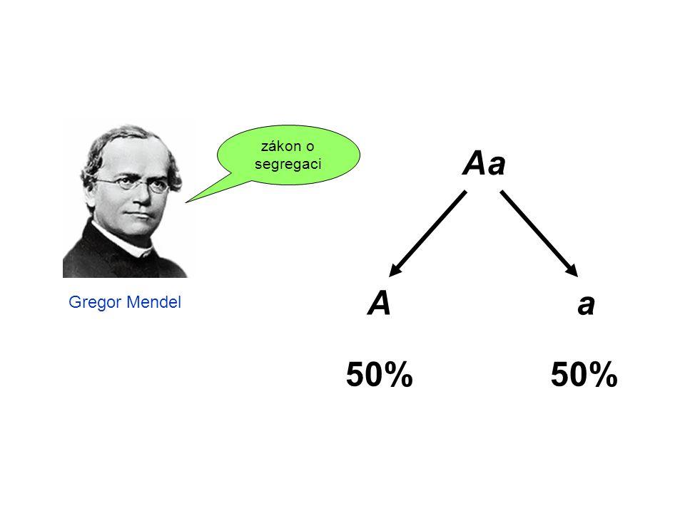 Aa Aa 50% Gregor Mendel zákon o segregaci