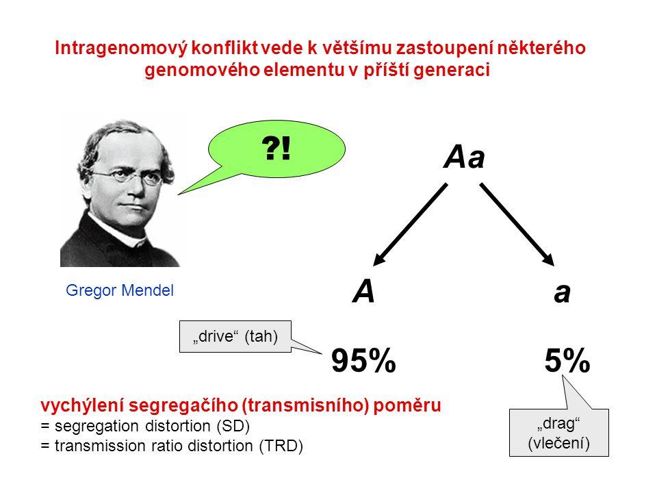 Intragenomový konflikt vede k většímu zastoupení některého genomového elementu v příští generaci Aa Aa 95%5% vychýlení segregačího (transmisního) pomě