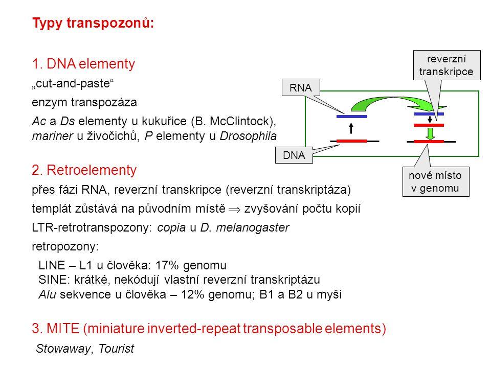 """Typy transpozonů: 1. DNA elementy """"cut-and-paste"""" enzym transpozáza Ac a Ds elementy u kukuřice (B. McClintock), mariner u živočichů, P elementy u Dro"""