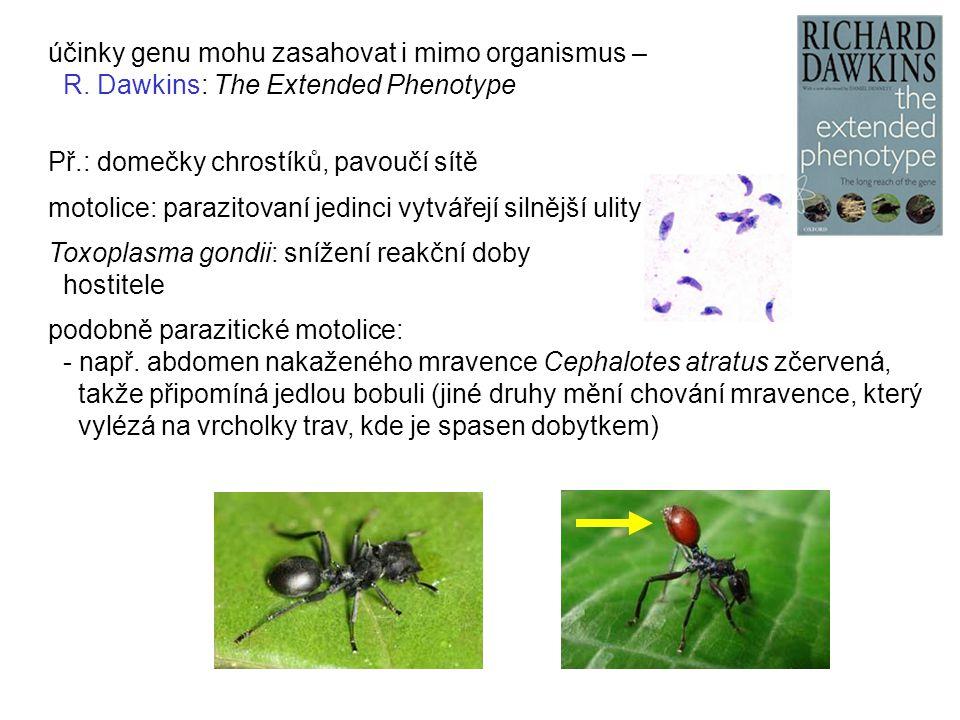 účinky genu mohu zasahovat i mimo organismus – R. Dawkins: The Extended Phenotype Př.: domečky chrostíků, pavoučí sítě motolice: parazitovaní jedinci