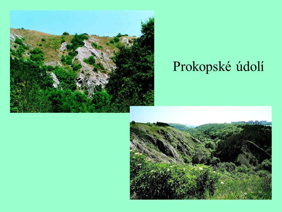 Šárecké údolí Šárecký potok Buližník v Šáreckém údolí
