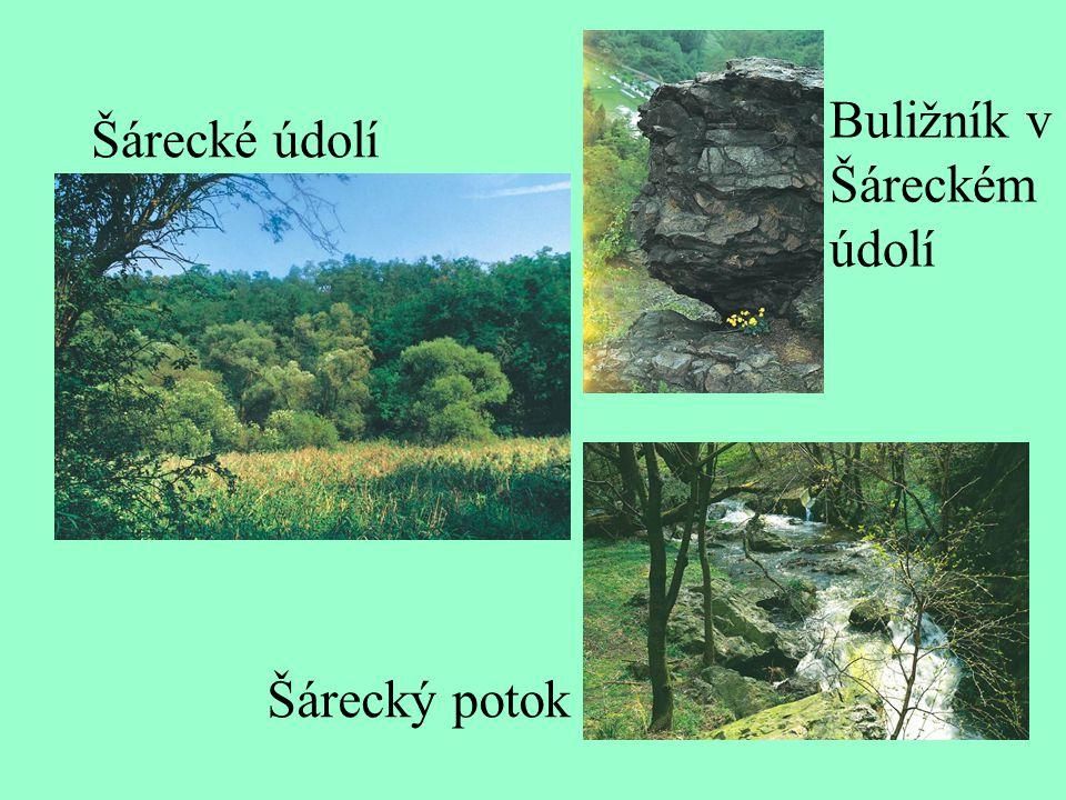 Zdroj: http://envis.praha-mesto.cz/rocenky/CHRUZEMI/cr2_cztx/chu- obsh.htm