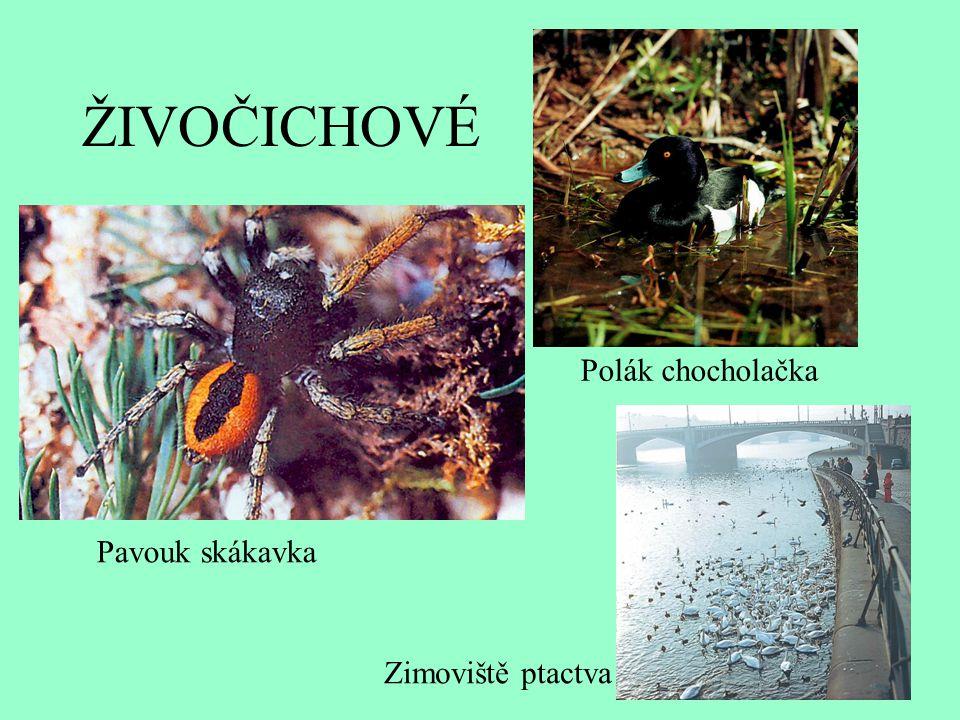ŽIVOČICHOVÉ Pavouk skákavka Polák chocholačka Zimoviště ptactva