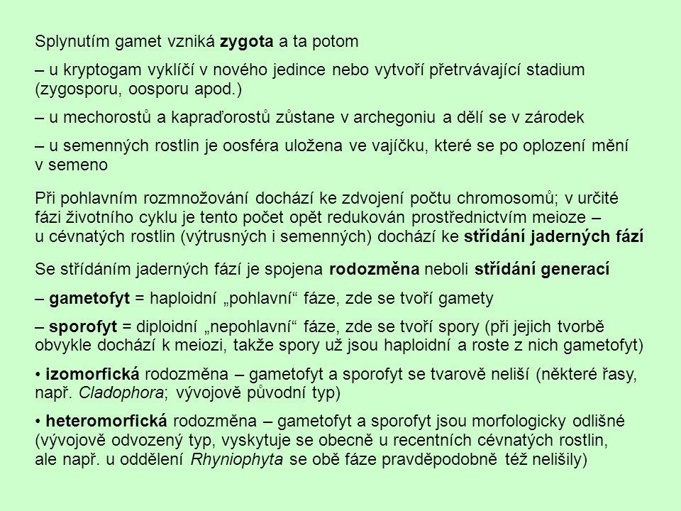 http://cavehill.uwi.edu/FPAS/bcs/bl14apl/pter2.htm a - lodyžka s lístky, b - výtrusy, c - tobolka, d - prvoklíček, e - pohyblivý spermatozoid, f - anteridium, g - archegonium, h - štět gametofyt sporofyt http://tunguz.zivly.cz/expedice.html Příklad heteromorfické rodozměny s převládajícím gametofytem, typické pro mechorosty (na obrázku je příklad mechu dvoudomého, kde se tvoří archegonia a anteridia na dvou různých jedincích), a heteromorfické rodozměny s převládajícím sporofytem, jakou najdeme u kapraďorostů – zde je gametofyt sice redukovaný, ale ještě po určitou dobu samostatně existující v podobě prothalia (u kapradin se používá český výraz prokel, zatímco prothaliu mechů se česky říká prvoklíček).