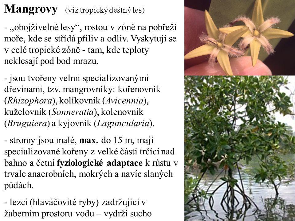 """Mangrovy (viz tropický deštný les) - """"obojživelné lesy , rostou v zóně na pobřeží moře, kde se střídá příliv a odliv."""