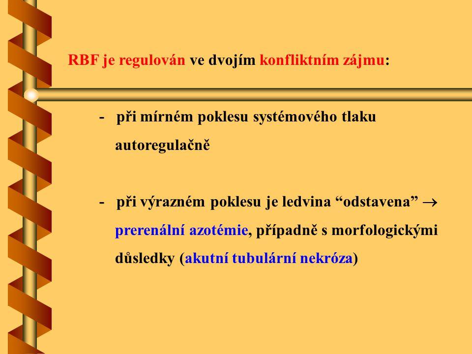 RBF je regulován ve dvojím konfliktním zájmu: - při mírném poklesu systémového tlaku autoregulačně - při výrazném poklesu je ledvina odstavena  prerenální azotémie, případně s morfologickými důsledky (akutní tubulární nekróza)