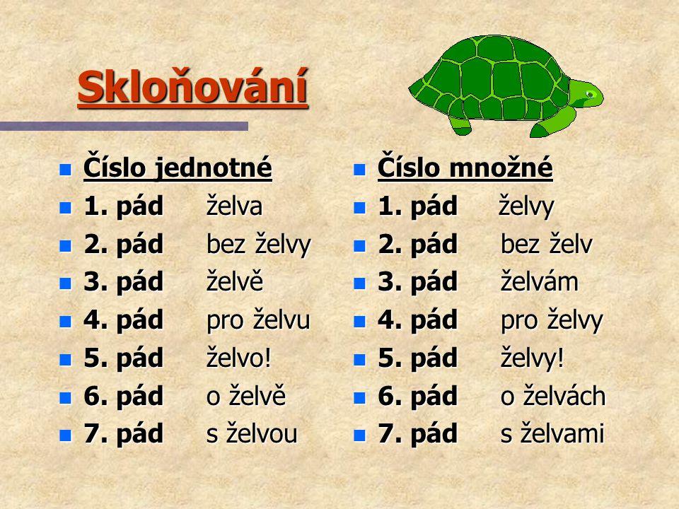Skloňování n Číslo jednotné n 1.pád želva n 2. pád bez želvy n 3.
