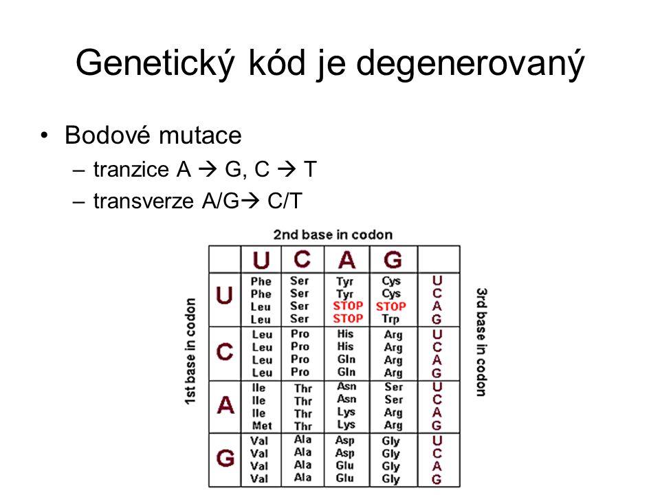 Genetický kód je degenerovaný Bodové mutace –tranzice A  G, C  T –transverze A/G  C/T