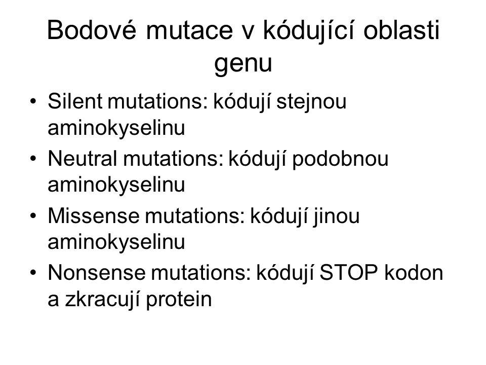 Bodové mutace v kódující oblasti genu Silent mutations: kódují stejnou aminokyselinu Neutral mutations: kódují podobnou aminokyselinu Missense mutations: kódují jinou aminokyselinu Nonsense mutations: kódují STOP kodon a zkracují protein