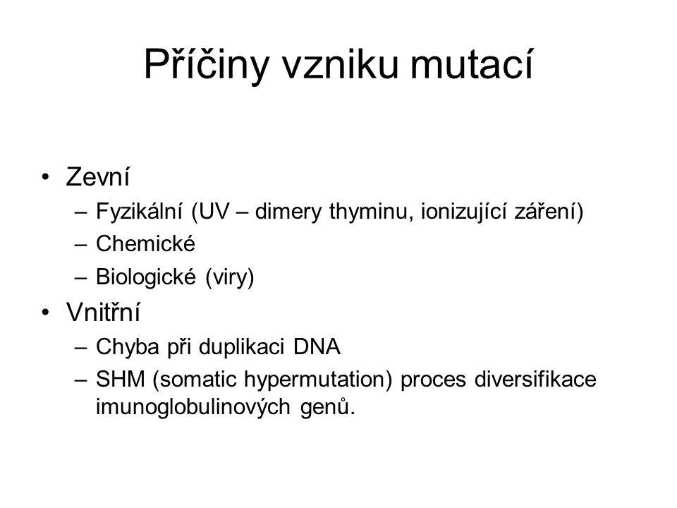 Příčiny vzniku mutací Zevní –Fyzikální (UV – dimery thyminu, ionizující záření) –Chemické –Biologické (viry) Vnitřní –Chyba při duplikaci DNA –SHM (somatic hypermutation) proces diversifikace imunoglobulinových genů.