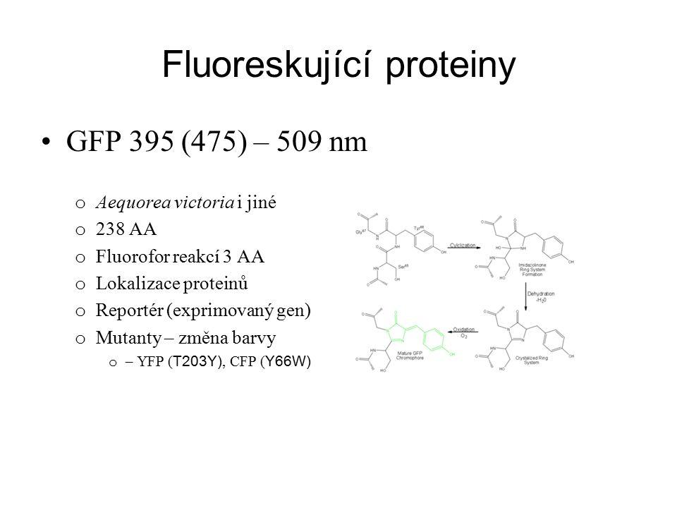Fluoreskující proteiny GFP 395 (475) – 509 nm o Aequorea victoria i jiné o 238 AA o Fluorofor reakcí 3 AA o Lokalizace proteinů o Reportér (exprimovan