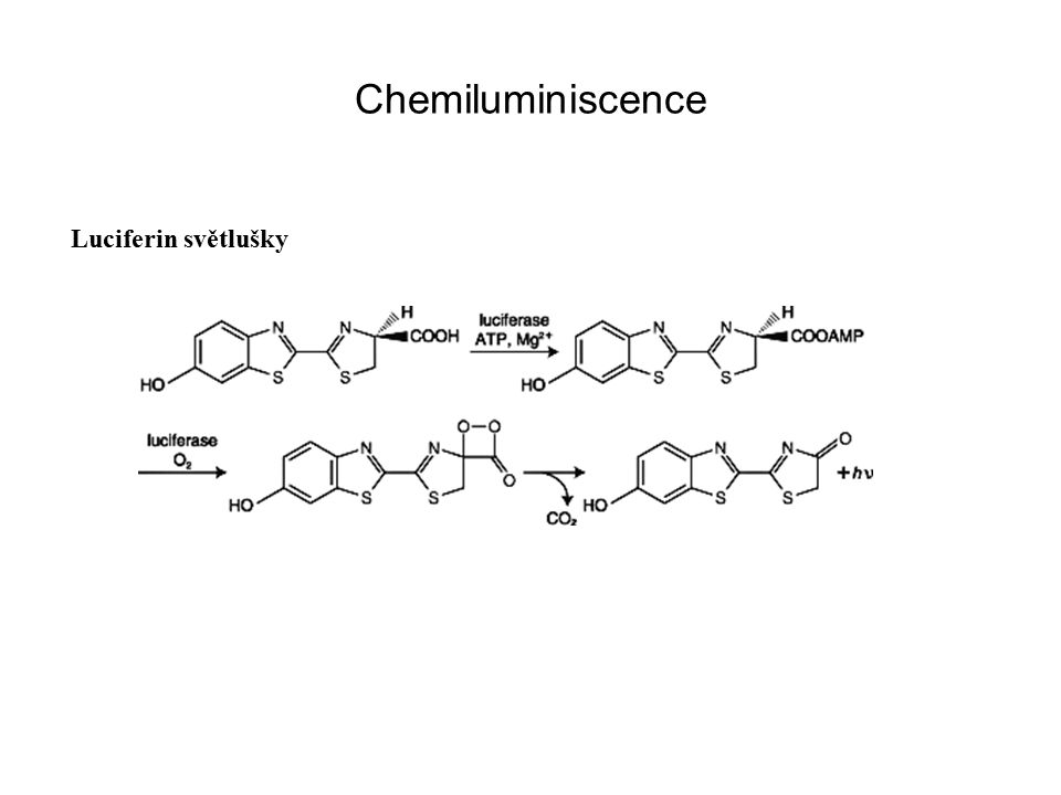 Chemiluminiscence Luciferin světlušky
