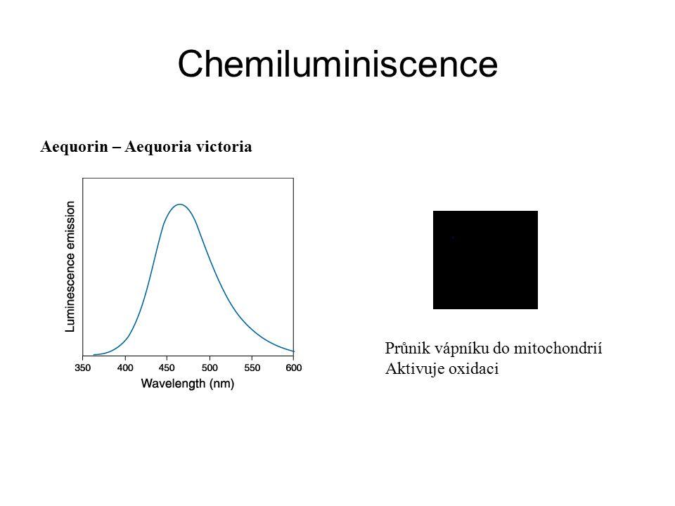 Chemiluminiscence Aequorin – Aequoria victoria Průnik vápníku do mitochondrií Aktivuje oxidaci