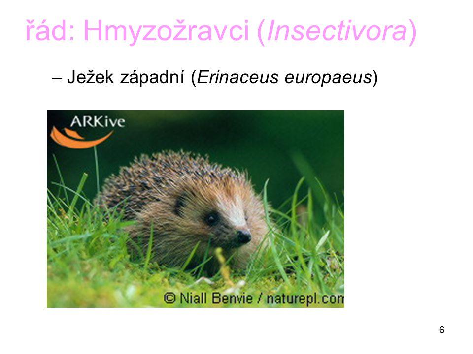 6 řád: Hmyzožravci (Insectivora) –Ježek západní (Erinaceus europaeus)