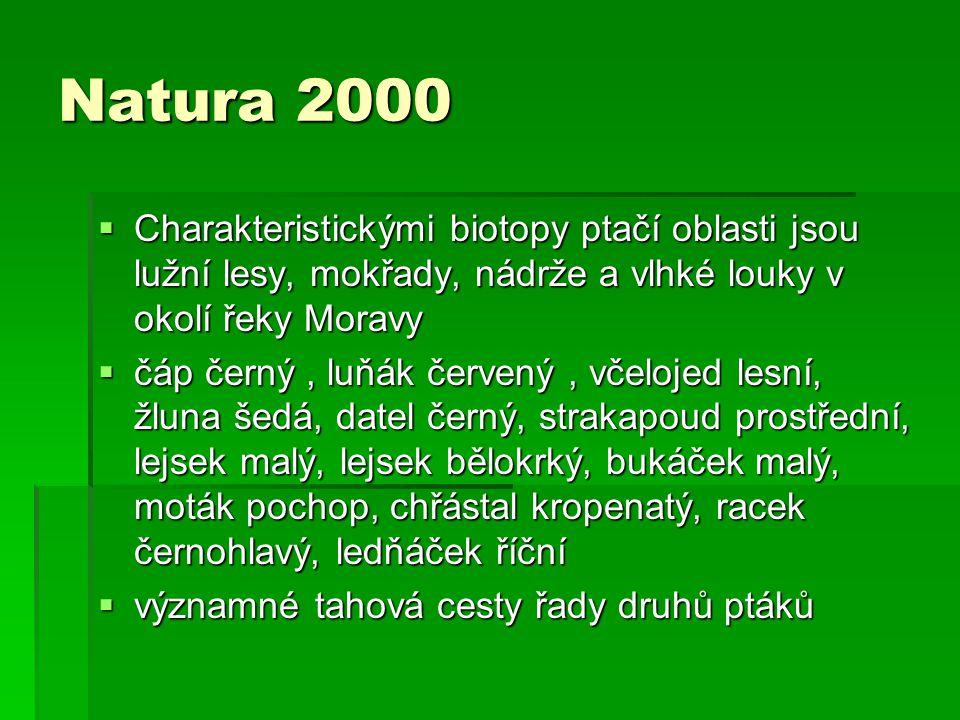 Natura 2000  Charakteristickými biotopy ptačí oblasti jsou lužní lesy, mokřady, nádrže a vlhké louky v okolí řeky Moravy  čáp černý, luňák červený,