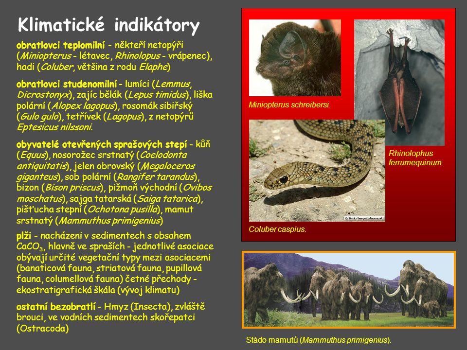 Klimatické indikátory obratlovci teplomilní - někteří netopýři (Miniopterus - létavec, Rhinolopus - vrápenec), hadi (Coluber, většina z rodu Elaphe) Miniopterus schreibersi.