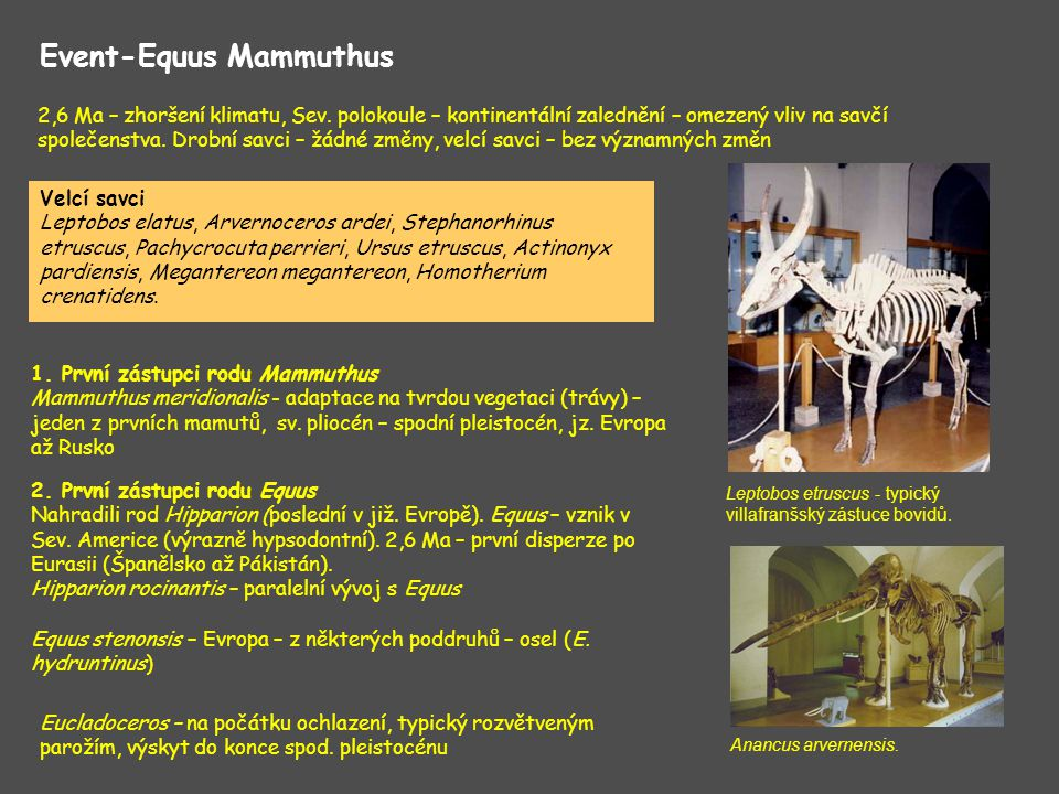 Vlivem zalednění mizí lesní formy: Sus arvernensis, Tapirus arvernensis, Mesopithecus Zleva doprava: Croizetoceros ramosus, Eucladoceros senezenzis, Megaloceros savini, Megaloceros giganteus a Cervus elaphus.