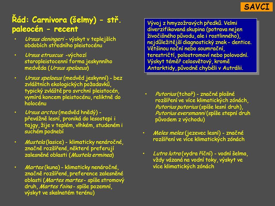 Řád: Carnivora (šelmy) - stř.paleocén - recent Vývoj z hmyzožravých předků.