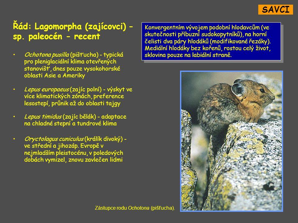 SAVCI Řád: Lagomorpha (zajícovci) - sp.