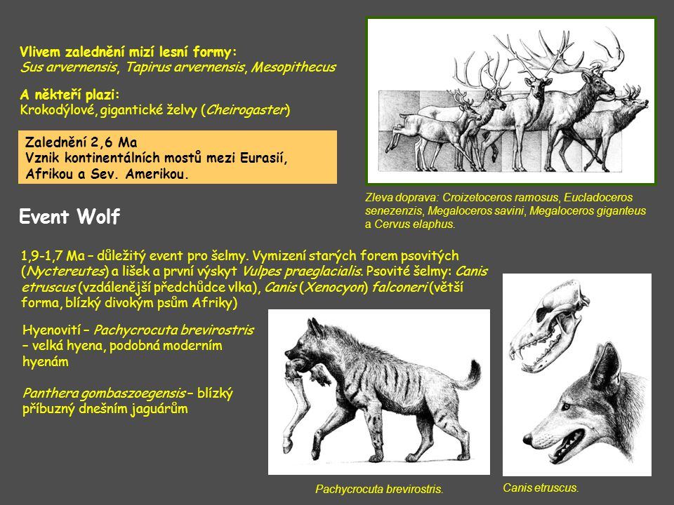 Kopytnatci – méně významné změny Libralces gallicus – nejstarší los; Gallogoral meneghini – příbuzný dnešním antilopám; rod Praeovibos (předchůdce pižmoně) Libralces gallicus, lokalita Senēze.