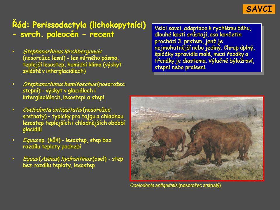 SAVCI Řád: Perissodactyla (lichokopytníci) - svrch.