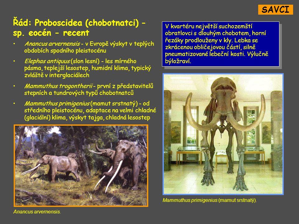 SAVCI Řád: Proboscidea (chobotnatci) - sp.